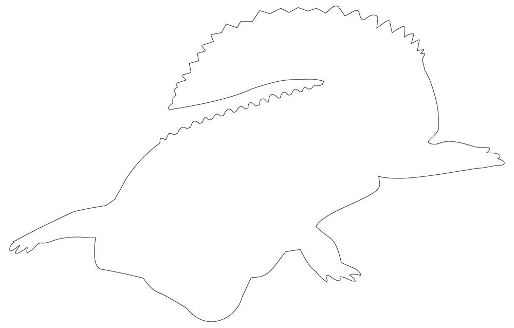Alligator Outline