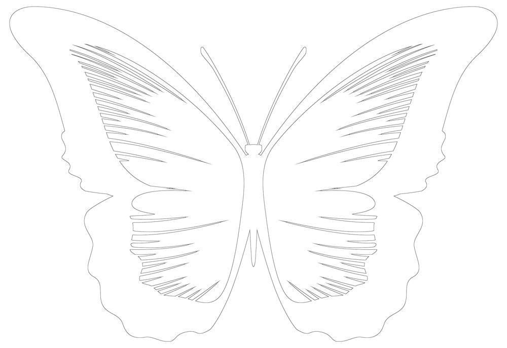 photo relating to Printable Butterfly Template identified as Butterfly Template Printable Butterfly Determine