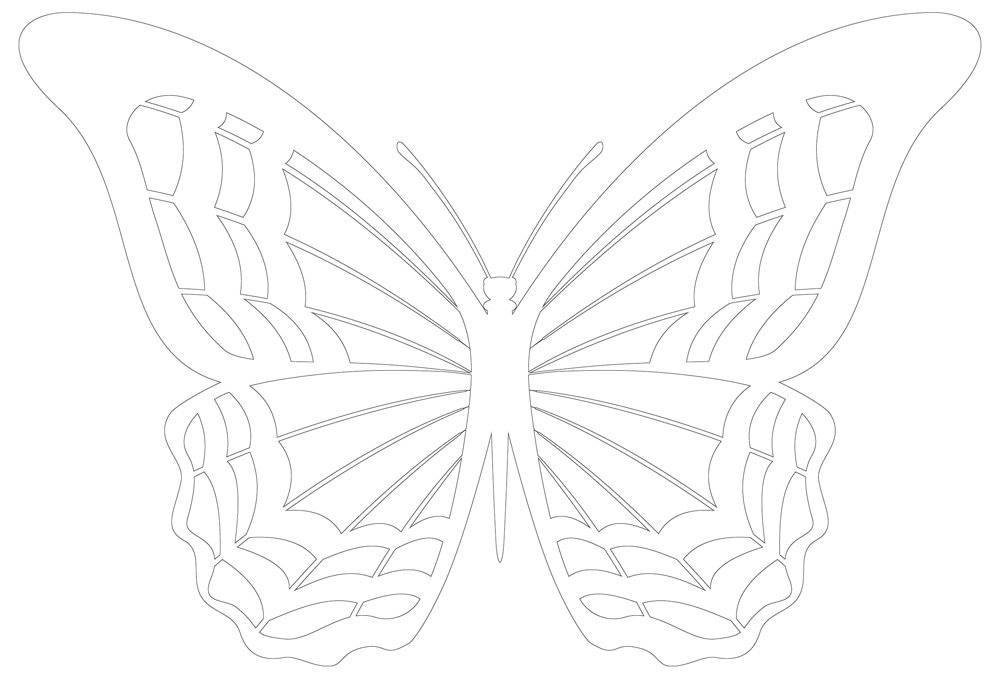 Butterfly Wing Patterns - Outline of Butterfly