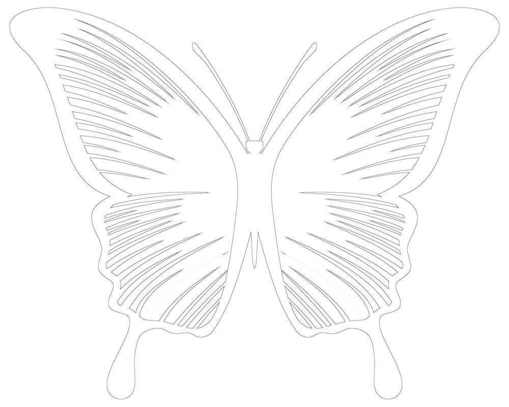 Coloring Pages Butterfly - 30 Butterflies to Choose From
