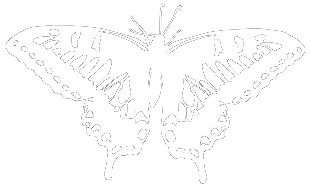 Butterfly Outline with Details on Wings, Printable